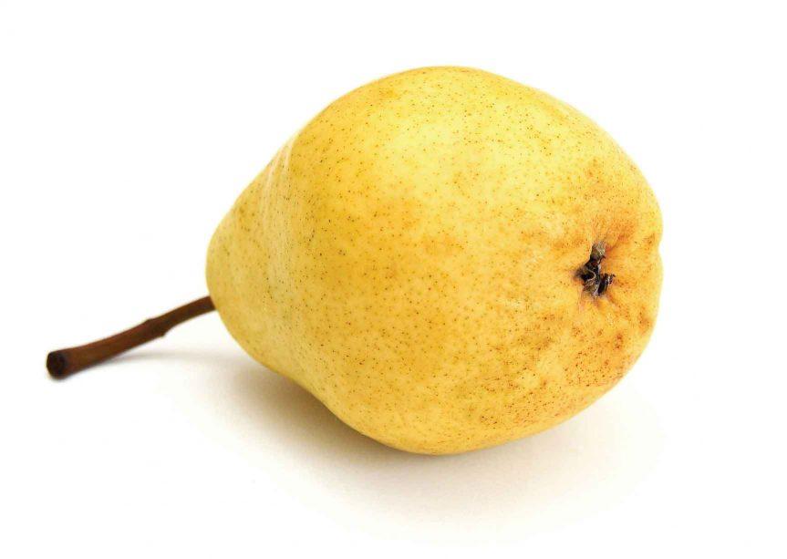 ovocie-hruska-v1